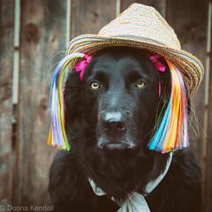 6th birthday portrait (bratli) Tags: birthday 6 deacon dog canine portrait