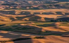 Palouse View.IMGP2249 (candysantacruz) Tags: washington fields farms palouse steptoebutte