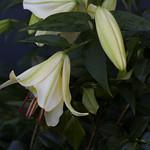 oneplant, ouryard, jdy199 XX201607179133.jpg thumbnail