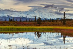 Mount Denali reflecting in a pond - Denali National Park (Sinar84 - www.captures.ch) Tags: 2016 alaska august black blue bushes clouds denali denalinationalpark fall foliage gras green grey hills landscape lastfrontier mountdenali mountains nationalpark nature orange red sky trees usa white yellow