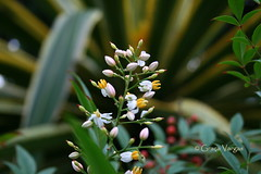 delicate ( Graa Vargas ) Tags: flower wildflower graavargas 2016graavargasallrightsreserved purple canon canoneos400d 10808210916