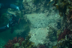 20160821-DSC_4544.jpg (d3_plus) Tags:  southizu 1nikkor185mmf18 fish marinesports apnea zoomlense sea j4 underwater nikon1  skindiving watersports sky  japan  50mmf18 50mm nikonwpn3 185mm   185mmf18 nikkor   nikon1j4  nikon  snorkeling wpn3 port scenery diving   1  drive   waterproofcase  izu