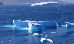 Translucent Icebergs in Qeqertaq (twiga269  FEMEN #JeSuisCharlie) Tags: twiga269 om  whatareyoutrainingfor gettingstrongereveryday wanderlust wilderness mountainwilderness mw gngl grandnordgrandlarge gro023 greenland kalaallit nunaat kalaallitnunaat disko bay baiededisko diskobugten ilulissat qeqertaq saqqaq groenland grnland groenlandia grnland grenlandia   kayak iceberg ice hielo glace glacier immense gletscher ericchazal arctic diskoline inlandsis torssukatak kangilerngata kangilerngatasermia eqi eqip sermia smallesund iceisbeautiful