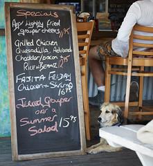 Lunch with the Dogs (Jim Schaedig) Tags: geigerkeymarina bar restaurant dog florida jds201604081669 menu specials