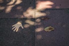 #14 Autumn (chrisowenrichards) Tags: leaves sunlight paper pavement hand autumn street cutout