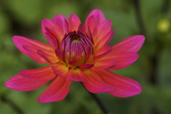 Flower (Aperture111-Thanks for 1000000+ views) Tags: flower macro nature sigma105mm