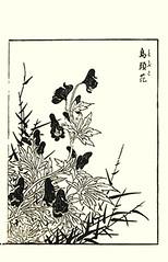 Monkshood (Japanese Flower and Bird Art) Tags: flower monkshood aconitum chinense ranunculaceae tatsunobu kitao kano woodblock picture book japan japanese art readercollection
