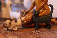russian blue cat / ooak by p4d (photos4dreams) Tags: russianbluecatp4d schleich cat ooak toy plastic spielzeug plastik photos4dreams p4d photos4dreamz photo katze russischblau russianblue repaint custom