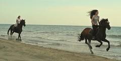 Reiterin (ni22co) Tags: rider cavaliere calareata cavalier ryttare italia horse hest pferd hevonen cheval hestur cavallo konj paard kon cal hst caballo kun beygir