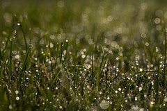 Grass with bokeh