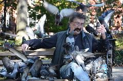 Bird Feeder (Darrin R Towne) Tags: park newyork bird birds bench feeding manhattan pigeon washingtonsquarepark pigeons seeds feed