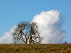 tree with head in clouds (nannyjean35) Tags: blue sky cloud fern tree grass branches twigs