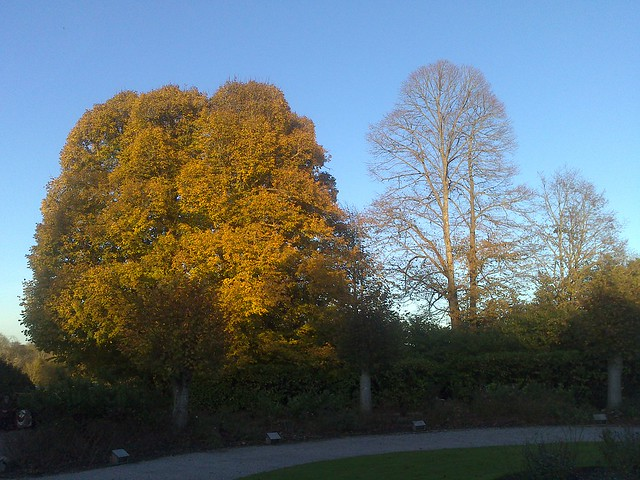 Autumn Trees at Kingston Lacy