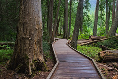 Pathways (dbushue) Tags: trees nature forest landscape nikon montana path trail walkway glaciernationalpark cedars 2012 enchanting gnp coth supershot trailofthecedars absolutelystunningscapes d7000 dailynaturetnc12