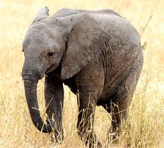 Photo representing Tanzania, September 2012