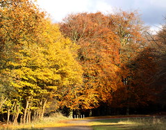 autumn trees (bugman11) Tags: autumn trees tree nature canon landscape flora nederland thenetherlands 1001nights flickraward 100mm28lmacro mygearandme mygearandmepremium mygearandmebronze 1001nightsmagicnights ringexcellence allnaturesparadise rememberthatmomentlevel1 infinitexposure