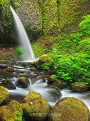 """Ponytail Falls"" By Robert Park (Robert Park Photography) Tags: travel vegas trees newyork tree art tourism nature racetrack wonder point landscape photography waterfall nationalpark gallery photographer natural lasvegas wildlife nevada fineart soho galleries national collectors naturalwonders pigeonpoint fineartphotography wolfe macrophotography autofocus lasvegasstrip striplas thepalazzo lasvegasshopping robertpark simplysuper theshoppesatthepalazzo flickraward photoenlargements photographycollectors mygearandme mygearandmepremium mygearandmebronze dblringexcellence flickrbronzetrophygroup tplringexcellence newjerseytnc10 photocontesttnc12 dailynaturetnc12 rememberthatmomentlevel1 robertbpark naturalwondersgallery theshoppesatthepalazzonevadagallery httpwwwrobertparkcom robertparkcom"