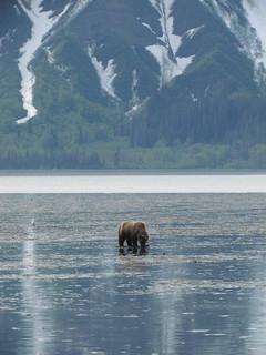 Alaska Kenai River Fishing and Saltwater 42