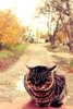Cat (Slava Symchuck) Tags: autumn trees house look yellow cat him serious near sit behind осень кот взгляд грозный