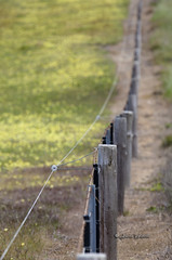 Electric Fence - 0375-2 (Jason Whittle Photography) Tags: fence post electricfence fenceline farmfence
