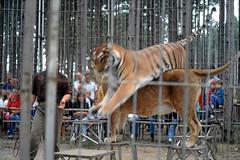 Safaripark Gnserndorf 38 (Opa Jimmy) Tags: safaripark gnserndorf