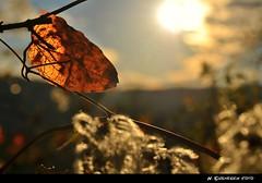 NovemberGold (H. Eisenreich Foto) Tags: autumn sunset sun fall nature leaf nikon ast branch sonnenuntergang herbst natur hans blatt sonne hohenburg eisenreich mygearandme