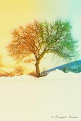 Contrasti (Max) Tags: flowers trees sunset sky parco macro nature fauna landscape nikon tramonto foto natura campagna cielo fiori toscana terra albero riflessi paesaggi 18200 montagna borgo hdr luce paesaggio bosco casentino iphone diga sansepolcro