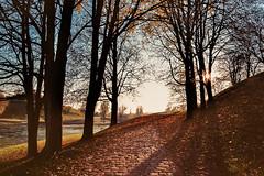 Autumn isn't actually that bad... (Adam Haranghy) Tags: park camera blue autumn trees sky brown sun tree film leaves analog canon landscape photography eos gold bright kodak herbst scene iso fallen olympia 100 olympic grn landschaft kamera olympiapark 24105 ektar