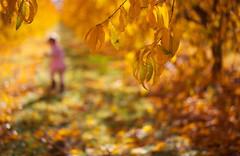 Lost in Dreamland (Philocycler) Tags: light northerncalifornia toddler bokeh vibrant fallcolors peachorchard dreamorreality lostindreamland bokehfigure
