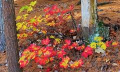 DSC_7147b (2) (johnjmurphyiii) Tags: statepark autumn usa connecticut bigelowhollow stateforest nipmuck 06076 johnjmurphyiii