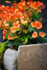 Bellagio 146 (- Adam Reeder -) Tags: 2008 adamreeder bellagio best europe italy summer travel westerneurope wwwadammreedercom photography world adam reeder food photos flickr awesome photo cool spectacular coconutbarometer kk6gpv personal wwwkk6gpvnet areed145 y2008 m07 d06 lat460 lon90 como lombardy jpg nikon d40 146 fountain terrapin jigsawpuzzle jellyfish beerglass slot monitor television goldfish screen