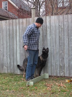 Obedience training-- not necessarily the best for young adults or any other adult, From ImagesAttr