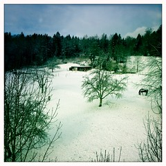Snow in Switzerland (Davide Restivo) Tags: snow switzerland europa europe aarau noflash neve svizzera aargau rombach johnslens hipstamatic blankofilm