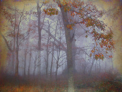 The Foggy Woods (h_roach) Tags: autumn fall nature horizontal misty fog forest outdoors woods northcarolina explore blueridgeparkway