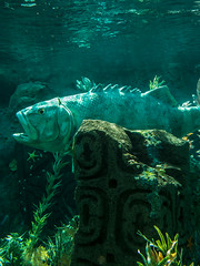"""Finding Nemo Submarine Voyage - Disneyland • <a style=""""font-size:0.8em;"""" href=""""http://www.flickr.com/photos/85864407@N08/8246146016/"""" target=""""_blank"""">View on Flickr</a>"""
