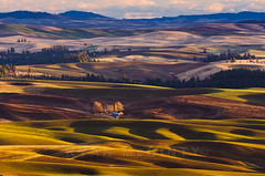 Palouse Evening Winter Wheatland (Ryan McGinty) Tags: autumn sunset landscape washington farmland fields palouse whitmancounty winterwheat steptoebutte ryanmcginty