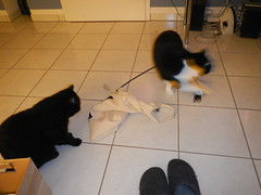 My sack! (Ottmar H.) Tags: cat chat gato katze macska  kater  tomcat
