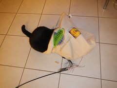 What's in there? (Ottmar H.) Tags: cat chat gato katze macska  kater  tomcat