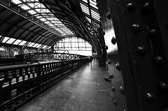 Estação de Trem da Luz (De Santis) Tags: brazil bw white black luz branco brasil train nikon downtown metro sãopaulo centro sigma pb preto sp paulo 1020mm trem são metrô estação julioprestes d5100 fernandodesantis