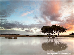 It Will Come (AnthonyGinmanPhotography) Tags: sunrise reflections mangrove theroyalnationalpark bonnyvale