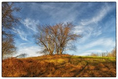 Grove - Germantown, MD (gastwa) Tags: sky tree germantown nature clouds landscape dc washington nikon focus scenery control angle wide perspective shift maryland wideangle andrew 24mm manual fullframe fx tilt d800 f35 tiltshift pce gastwirth d800e andrewgastwirth