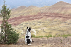 admiring the Painted Hills (and the Painted Dog) (Claudia Knkel) Tags: dog oregon blanca paintedhills johndayfossilbedsnationalmonument