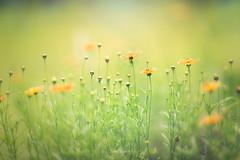 Dreamscape (Elizabeth_211 (off until mid-Sept)) Tags: bokeh garden flowers floral spring nature