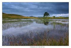 Kelly Hall Tarn (Phil Durkin) Tags: 2016 coniston cumbria england hodgeclosequarry kellyhalltarn lakedistrict lakedistrictnationalpark trees uk daytime lake summer tree lonetree