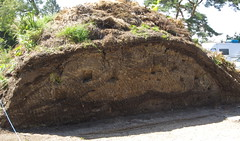 Geological strata of a compost heap (Badly Drawn Dad) Tags: christopherlloyd compost eastsussex fossilised garden gbr geo:lat=5099686282 geo:lon=059076673 geotagged greatdixter northiam unitedkingdom