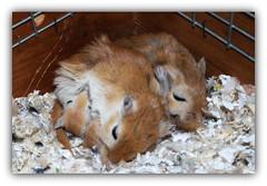 4 cuori e una capanna :-) (peter-ray) Tags: topo rat gerbil criceto hamtaro animal cucciolo peter ray samsung nx2000 nature