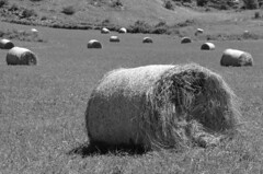 Summer works B&W (dfromonteil) Tags: nature summer dof bw nikon alpes alps landscape paysage hay bales