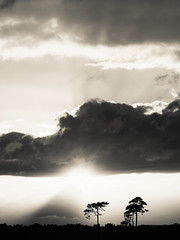 Curragh Near Sunset Sept 2016 (kckelleher11) Tags: ireland kildare olympus sunset curragh em5