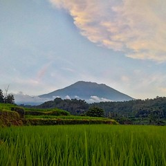 Mt. Agung seen from the South (Aditya S. Andreas) Tags: instagramapp square squareformat uploaded:by=instagram bali agung paddy