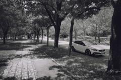 (M.K. Design) Tags: 2016                       taiwan nantou puli ncnu school university nikon d800e nature cars madebysweden volvo hatchback wagon blackandwhite brakes red cp5200 apracing v40crosscountry v40cc v40